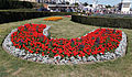 Bed of geraniums Broadstairs Kent England.jpg