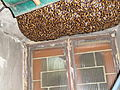 Bee Hive on the bracket of our window 11.JPG
