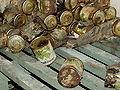 Beelitz Heilstätten -jha- 223983765636.jpeg