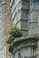 Begroeiing op de Onze-Lieve-Vrouwkerk te Damme - 369881 - onroerenderfgoed.jpg