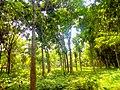 Bhangbaria,Notun Para,Alamdanga,Chuadanga.jpg