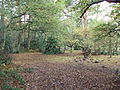 Bidston Hill - DSC04325.JPG