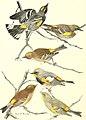 Bird lore (1906) (14750943262).jpg