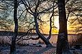 Björkby-Kyrkvikens naturreservat på vinteren.jpg