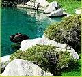Black Swan, Palm Desert 2-22-14a (12756072204).jpg