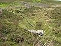Blaeberry Cleugh - geograph.org.uk - 1396856.jpg