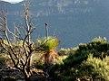 Blue Mtn Backdrop - panoramio.jpg
