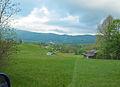Bog-rosemary (201109615).jpg