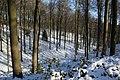 Bois du Pottelberg - Pottelbergbos 18.jpg