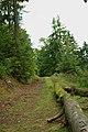 Bois vosgien dans la région de Lutzelhouse, Urmatt et Oberhaslach, Bas-Rhin.jpg