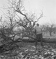 Bosbewerking, arbeiders, boomstammen, gereedschappen, Bestanddeelnr 251-7781.jpg