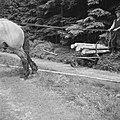 Bosbewerking, arbeiders, dieren, boomstammen, vervoeren, paarden, Bestanddeelnr 251-9539.jpg
