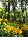 Bosque camino a quilquilil.jpg