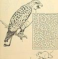 Boston park rangers nature book (1997) (20374294046).jpg