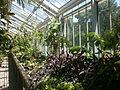 Botanička bašta Jevremovac 070.JPG