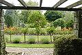 Botanic garden Bratislava ros.JPG