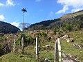 Brasil Rural - panoramio (9).jpg
