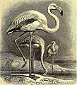 Brehms Tierleben - allgemeine Kunde des Tierreichs - mit 1800 Abbildungen im Text, 9 Karten und 180 Tafeln in Farbendruck und Holzschnitt (1892) (20420880581).jpg