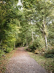 Bridleway birches - geograph.org.uk - 583218.jpg