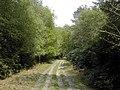 Bridleway on the Hamptworth Estate - geograph.org.uk - 417289.jpg