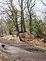 Bronze Age Barrow, Moneybury Hill - geograph.org.uk - 1185054.jpg