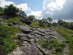 Buffalo Mountain Natural Area Preserve - Image: Buffalo Mountain summit Virginia