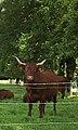 Bull (2663073243).jpg