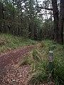 Burgh Track - panoramio (14).jpg