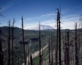 Burned forestland in the foreground, Mount St. Helens volcano in the distance, several years after a cataclysmic eruption in 1980 LCCN2011632001.tif