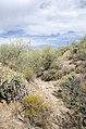 Butcher Jones Trail to Pinter's Point Loop, Tonto National Park, Saguaro Lake, Ft. McDowell, AZ - panoramio (129).jpg