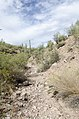 Butcher Jones Trail to Pinter's Point Loop, Tonto National Park, Saguaro Lake, Ft. McDowell, AZ - panoramio (155).jpg