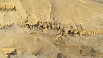 By ovedc - Aerial photographs of Luxor - 30.jpg