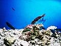 Cá biển Nha Trang 1.jpg