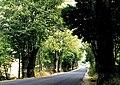 Cáceres, árboles 1975 05.jpg