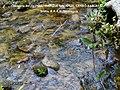 Cabeceras del río Iyas. - panoramio.jpg