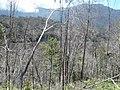 Cagar Alam Cyclops dengan sebuah telaga kecil yang tertutup pepohonan yang rapat.jpg