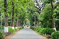 Campus Road - Bengal Engineering and Science University - Sibpur - Howrah 2013-06-08 9319.JPG