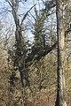 Caractéristique architecturale des forêts alluviales à bois dur.jpg