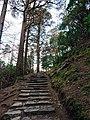 Cardiac Hill Steps Killarney Ireland.jpg