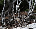 Cardigan State Park, 30 May 2009, no. 9.jpg