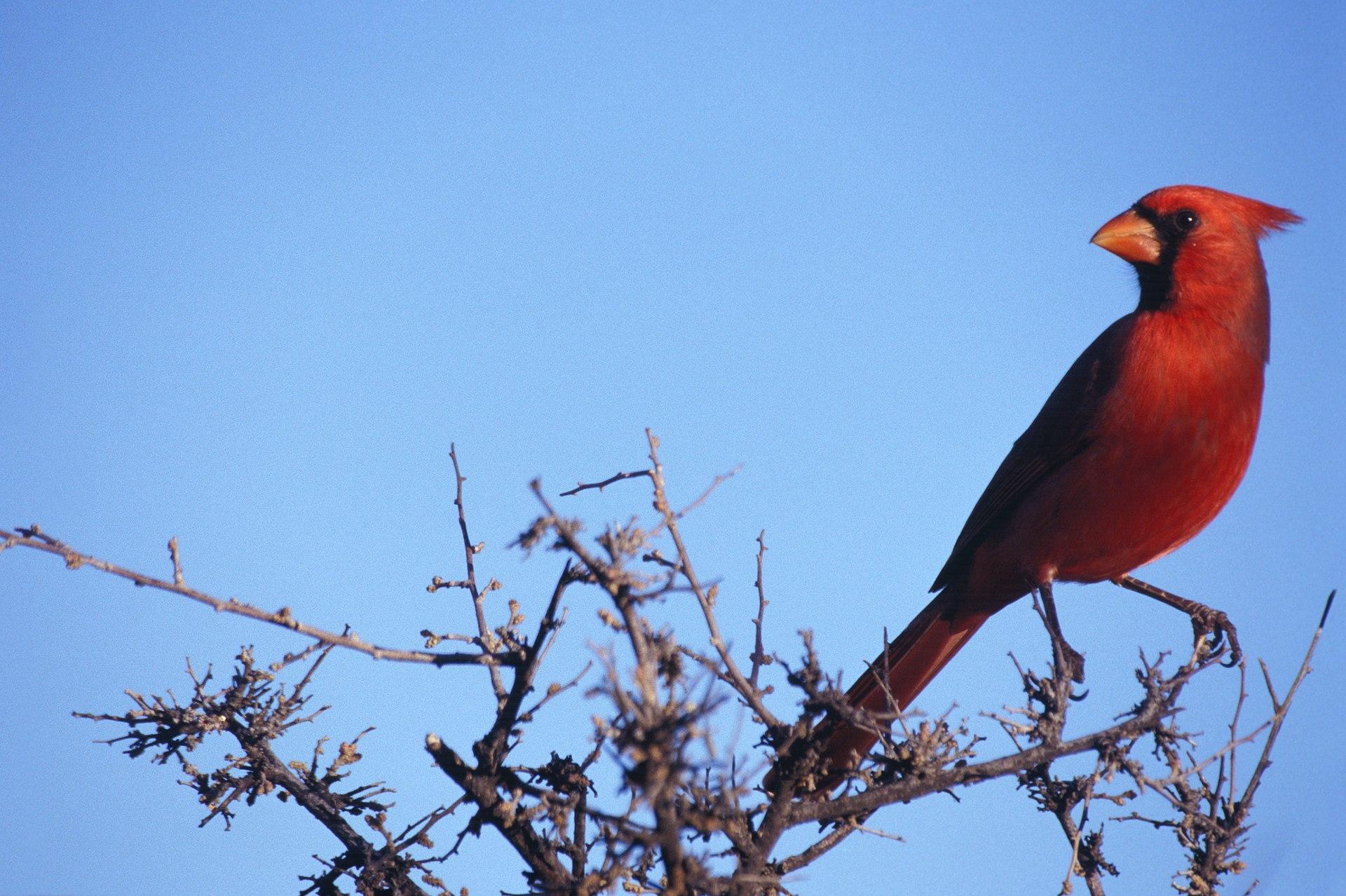 Couleur Cardinal Pour Decorer Une Salle A Manger