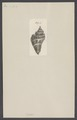 Cassis - Print - Iconographia Zoologica - Special Collections University of Amsterdam - UBAINV0274 005 01 0053.tif