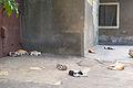 Cats-StoneTown-Zanzibar.jpg