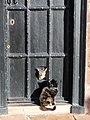 Cats and a catflap, Cathedral Close, Exeter - geograph.org.uk - 1118515.jpg