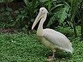 Central zoo, Jawalakhel4.jpg
