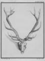 Cerf du Canada, bois - Canadian stag, wood - Gallica - ark 12148-btv1b2300253d-f28.png