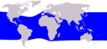 Rough-toothed dolphin range