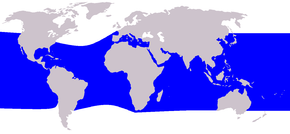 Description de l'image Cetacea_range_map_Rough-toothed_Dolphin.PNG.