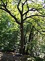 Chêne à l'Image.jpg