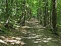 Chemin des Bruyères de Montubois (Forêt de Monmorency) - panoramio.jpg